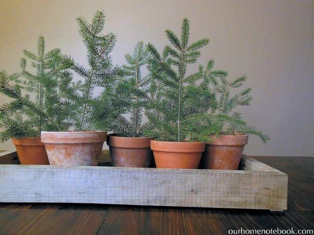Mini Potted Trees Centerpiece Our Home Notebook